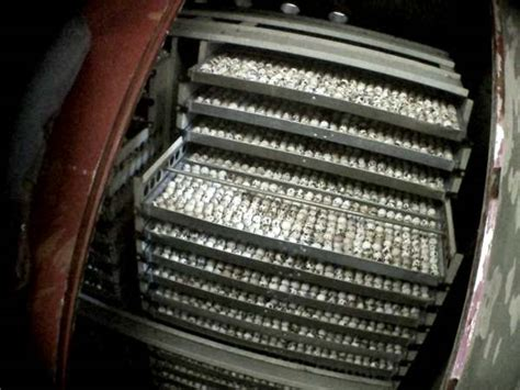 gabbie per allevamento quaglie allevamenti di quaglie gabbie troppo piccole antibiotici