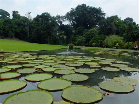 Tali Rami Bogor tempat wisata kebun raya bogor jelajah keindahan indonesia