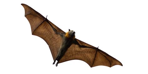 bat trapped in room prevent animal borne zoonotic disease san juan basin health