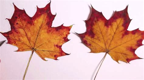 cara membuat gambar 3d hewan cara membuat gambar 3d dari daun gamber 3d cara membuat
