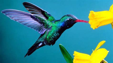 hummingbird jpg