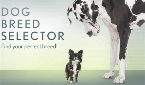 breed selector breed selector quiz myideasbedroom