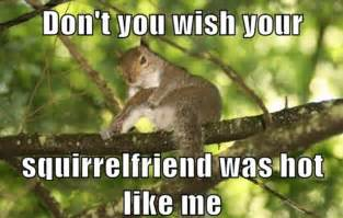 Dead Squirrel Meme - funny squirrel memes dog breeds picture