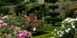 Pink Topiary - rose garden levens hall historic hall and gardens the lake district cumbria
