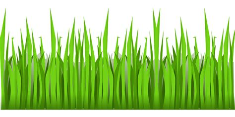 grass pattern png green grass growing 183 free vector graphic on pixabay
