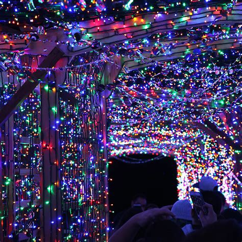 lights of the world groupon zoo lights st louis groupon decoratingspecial com