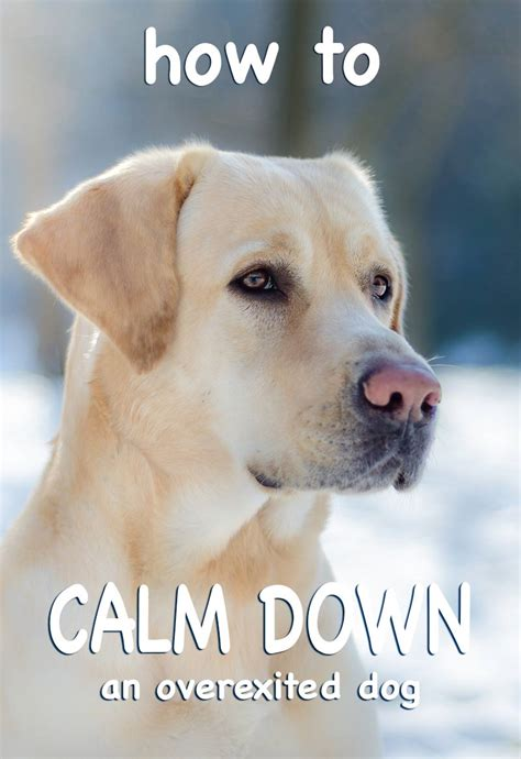 calm house dogs calm down www pixshark com images galleries with a bite