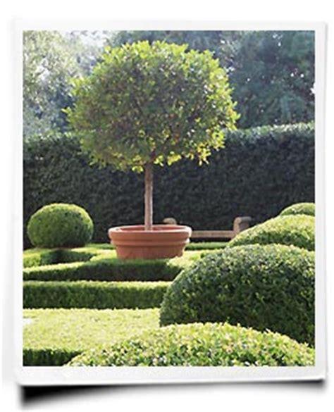 wann pflanzt kirschlorbeer buchsbaum pflanzen buchsbaumhecke pflanzen