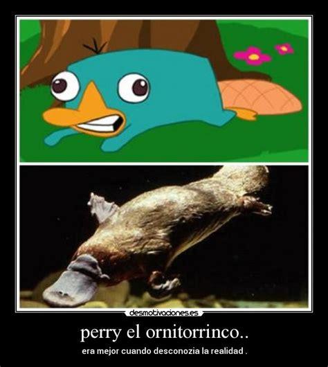 imagenes de ornitorrinco reales ornitorrincos animados imagui
