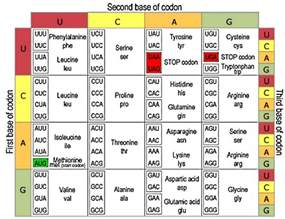 Genetic Table by Universal Code Biology