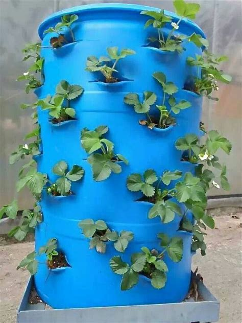Strawberry Barrel Planter by Strawberry Barrel Home And Garden