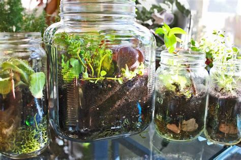 Handmade Terrariums - how to make jar terrarium ted s