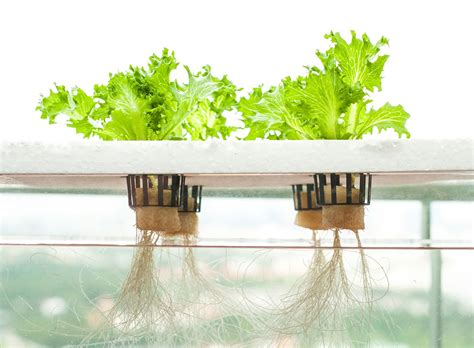 hydroponics archives citycrop