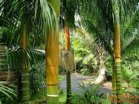 palm tree landscaping ideas home garden design