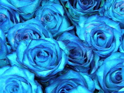 imagenes de rosas verdes y azules rosas verdes e azuis blog da floresnaweb entregas em