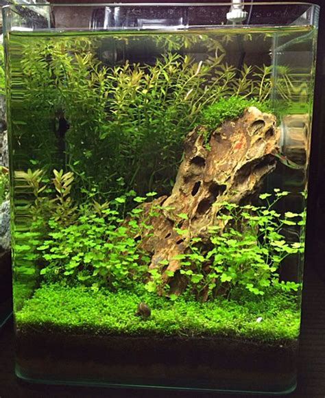 small aquarium aquascape what a beautiful nano aquascape needs an assassin snail or two to kill the snails in it though