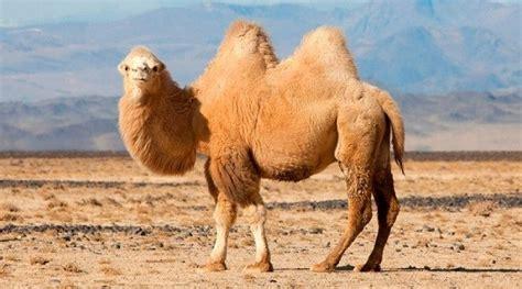 imagenes increibles de animales animales del desierto incre 237 bles
