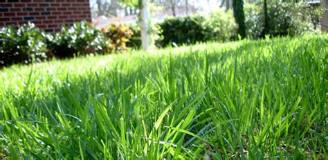 When and How to Fertilize Centipede Grass   Today's Homeowner