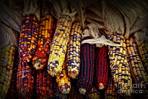 Native American Home Decor by Indian Corn Photograph By Elena Elisseeva