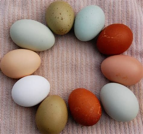 color of eggs the egg store green and blue and brown oh my