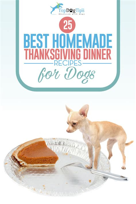 best thanksgiving dinner 25 best thanksgiving dinner recipes for dogs