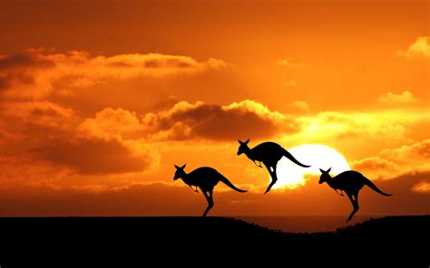 sightseeing and things to do in australia volsol