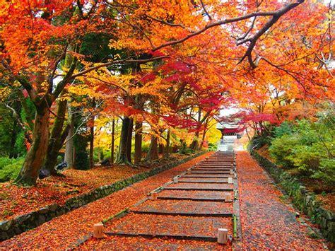 wallpaper daun musim semi aki musim gugur di jepang kelompok 3