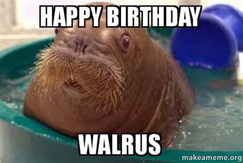 Walrus Meme - top walrus happy birthday meme wallpapers
