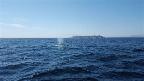 boat tours st john s nl best whale watching in newfoundland with o brien s boat