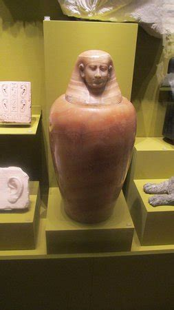 vaso canopo vaso canopo 233 poca grecorromana foto di museo egizio di