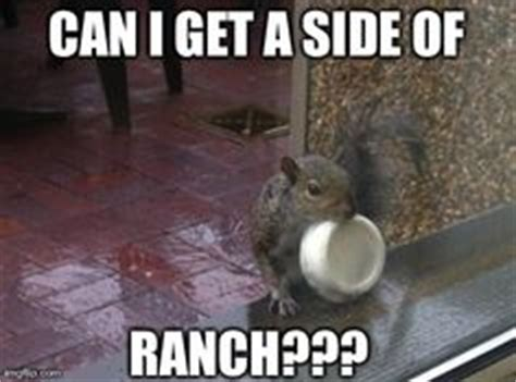 Dead Squirrel Meme - 1000 images about squirrels on pinterest squirrel