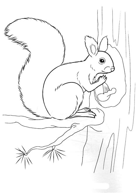 Coloring page - Squirrel holding a nut