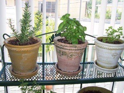 how to plant herbs in pots indoors