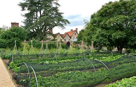 a vegetable garden from scratch preparing a vegetable garden from scratch