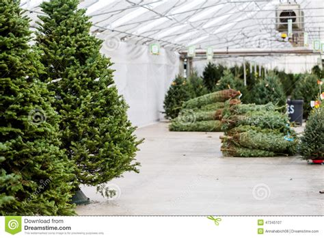 tree farm business plan