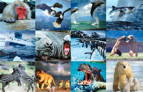 la fauna pictures la fauna animal en las organizaciones i hudipro