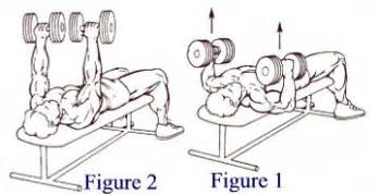 twisting dumbbell bench press execises for the chest muscles and assorted list of