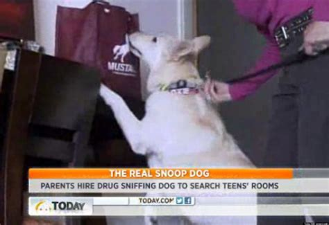 how to conceal drugs from a sniffer parents using sniffing dogs to monitor children s behavior report
