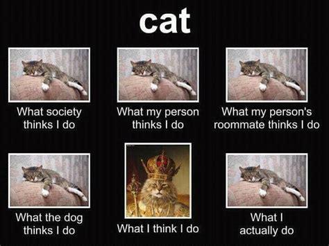 What Society Thinks I Do Meme - cat what society thinks i do funny bobbi s blog