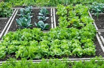 piccolo orto in giardino orto in pochi metri 10 consigli come e cosa piantare