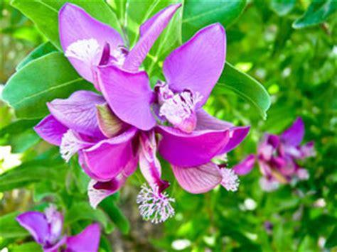 Fleurs Qui Resistent Au Vent by Haie Croissance Tout