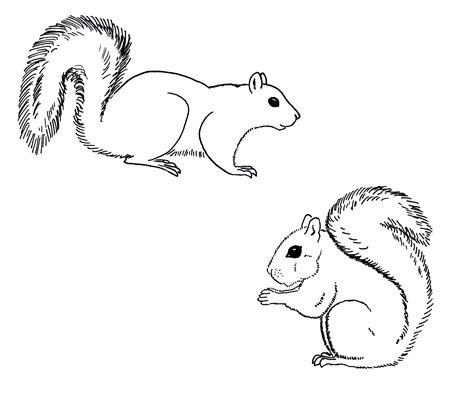 coloring page of a gray squirrel chuck does art coloring sheets grey squirrels