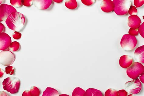 cornice per foto gratis cornice ravvicinata da petali di rosa scaricare foto gratis