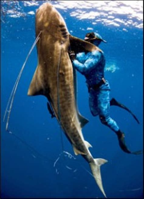fishing with spear image gallery speargun fishing