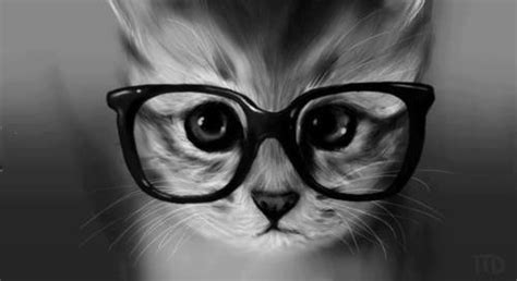 wallpaper hd chat lunette comprendre avant tout