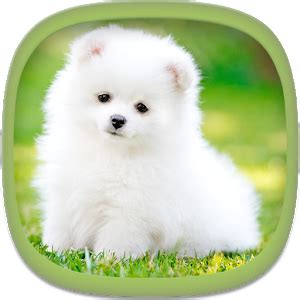 cute puppy android wallpapers for free cute puppy wallpapers android apps on google play