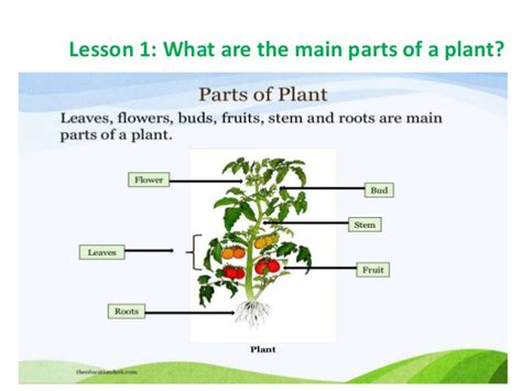 what are the two main sections of an html document plants 3rd grade