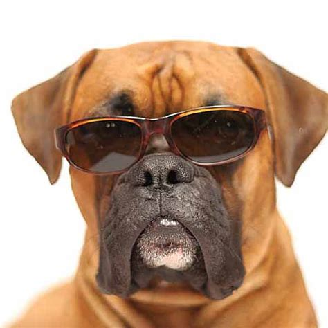 cool names for dogs names for and boxers names for boxers breeds picture