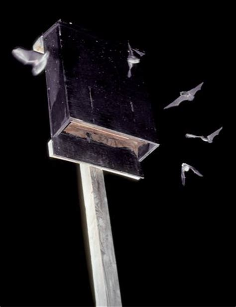 Bat Conservation International Bat House Plans Bats Build A Bat House And House On