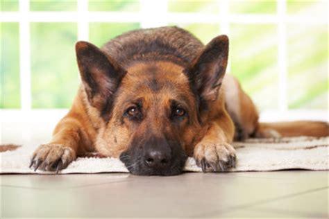 hund pinkelt in wohnung wenn er alleine ist mein hund macht alles kaputt wenn er alleine ist was tun